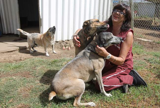 DOGGY LOVE: Pet Pals founder Sue Kriel shares some love with the dogs at the animal sanctuary which will move from its current Holm Hill location at the end of February. The animal sanctuary has a new home thanks to Kempston Picture: SARAH KINGON